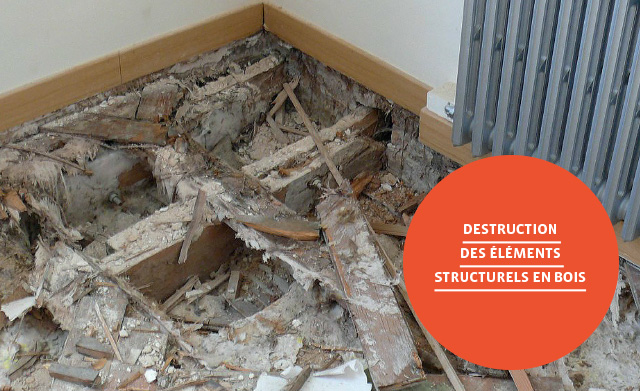 destruction-des-elements-structurels-en-bois-groupe-le-carre
