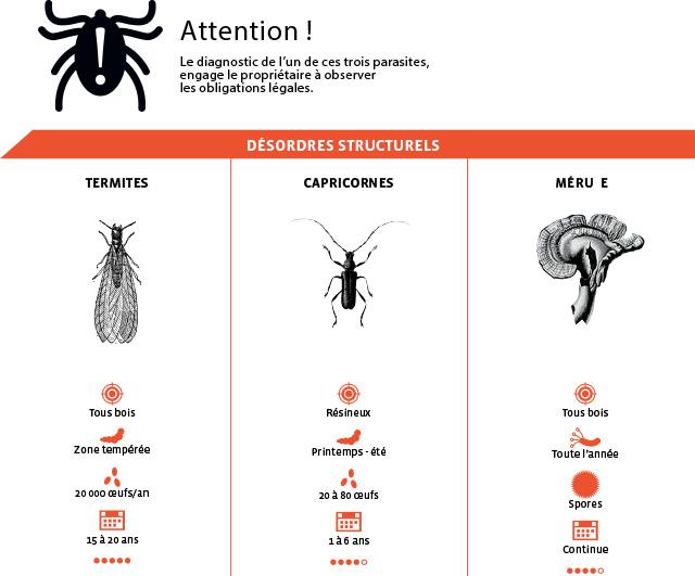 parasites-destructeurs-desordres-structurel-groupe-le-carre